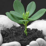 Plant sprouting in business mans hand symbolizing business growth